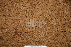 Производство и продажа зерновых