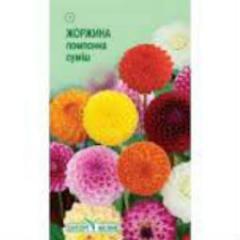 Semyon Georgina pomponny mix of 0,25 g