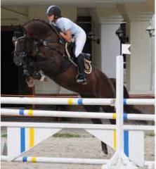 Продажа Лошадей Украина экспорт, Лошади для