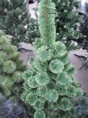 Pine of artificial 70 cm