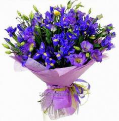 Bouquet Aramis