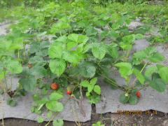 Agrotextiles