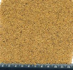 Sareptsky mustard / Oriental mustard seed /