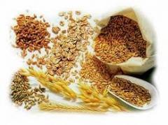 Зерновые на экспорт