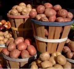 Potatoes high-quality, seed (Chernihiv)