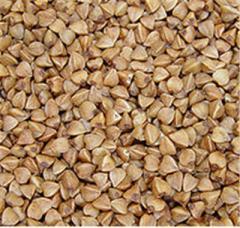 Buckwheat. Vinnytsia