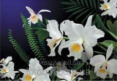 "Photowall-paper ""Wild orchid"