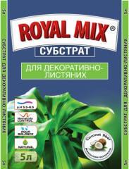 Substratum for decorative and deciduous royal mix,