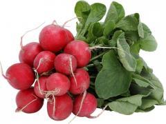Gloriet f1/gloriette f1 – a garden radish, sakata