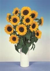Sunflower decorative sunbright supreme, sakata of