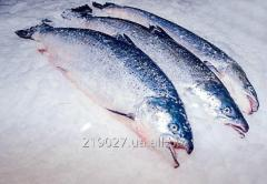 Fresh-frozen salmon 2-4 ORD 1 NOR
