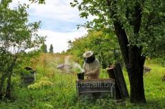 Костюм пчеловода Beekeeper 100% котон