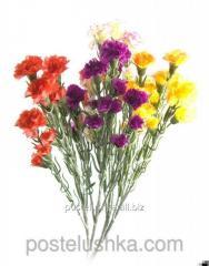 Цветы гвоздика 60 см