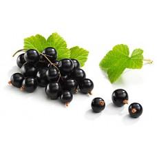 Fragrance food blackcurran