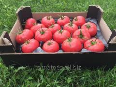 El tomate Rosad
