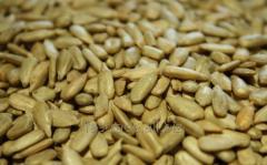 Kernel sunflower seeds of a sunflower
