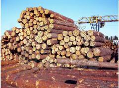Round timber pine sale price Ukraine