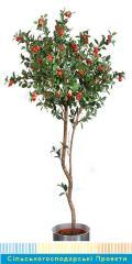 Саженцы яблонь, Ведущие питомники Голландии