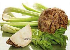 Celery r