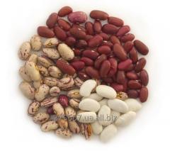 Leguminosas de grano