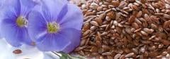 Flax, flax purchase, flax seeds