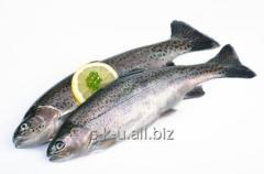 Additives for fishing industry