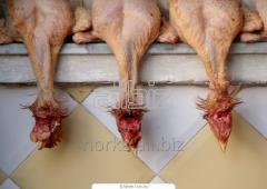 The frozen chicken heads in blocks