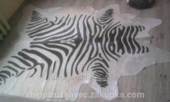 The skin of a zebra, Argentina, color beige in