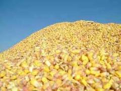 Кукуруза зерно, превозка, закупка, хранение зерновых и масличных культур