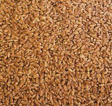 Пшеница озимая, превозка, закупка, хранение зерновых и масличных культур
