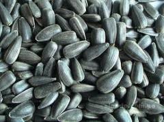 Калиброванная семечка подсолнечника, превозка, закупка, хранение зерновых и масличных культур