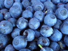 Berry (chornitsya)