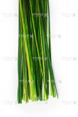 Bear Grasse green Code. BEL/9107