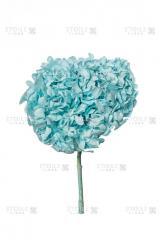 Gortention blue