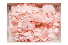 """Gortention """"Premium"""" pink in a"""
