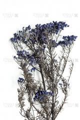 Diosmi blue