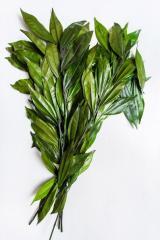 Kokulus is green