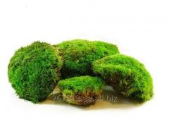 Moss kochkovy green 0,5 kg