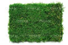 Moss plosk. 1 kg green