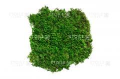 Moss plosk. pile. Green 1 kg