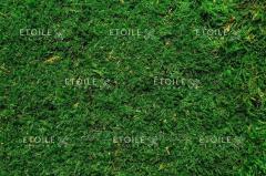 Moss flat 1 sq.m
