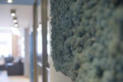 Moss Ays Bl Korobk's Reindeer lichen with a