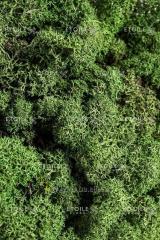 Мох Ягель зеленый 1 кг