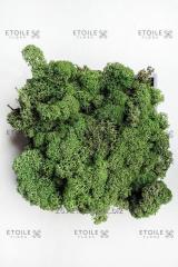 Moss Reindeer lichen green Box of 4 kg