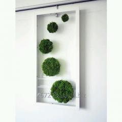 Moss Reindeer lichen Green Box with a window 500