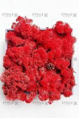 Moss Reindeer lichen red 1 kg