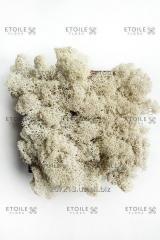 Moss Reindeer lichen Natural Box of 4 kg