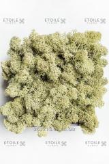 Moss Reindeer lichen Old Spring Korobka of 4 kg