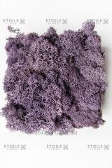Moss Reindeer lichen Purple Box of 4 kg