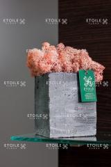 Moss Reindeer lichen Pink Box with a window 500 gr